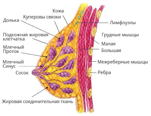 """Центр маммологии в """"Эс Клиник"""" Астрахань"""